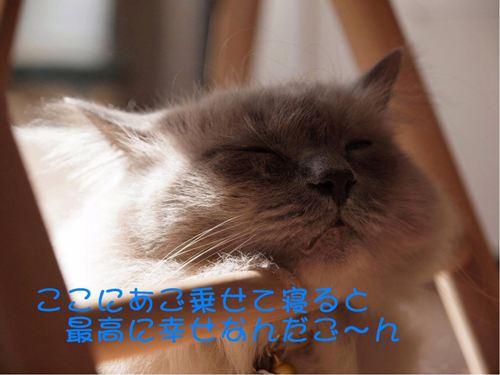 僕ごんちゃん (3)