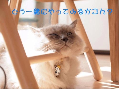 僕ごんちゃん (4)