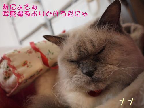 ナナとティッシュ (3)