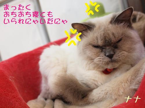 ナナとティッシュ (4)