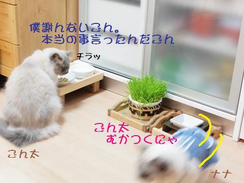 nana&ごん2