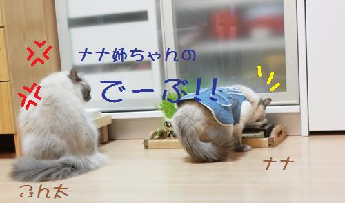 nana&ごん1