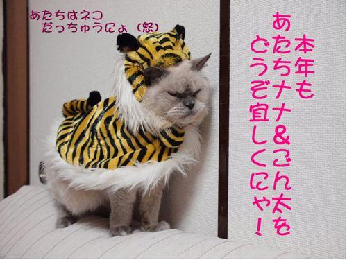 conv0009_20100102001548.jpg