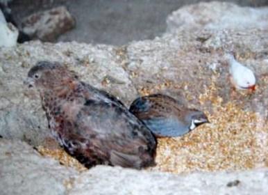 クイーンエリザベスパーク・鳥1