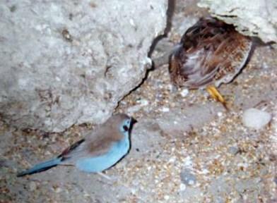クイーンエリザベスパーク・鳥2