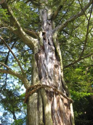 信貴山・かやの木2