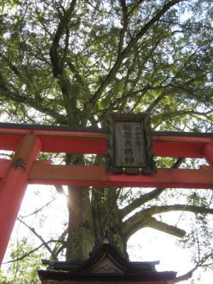信貴山・かやの木1