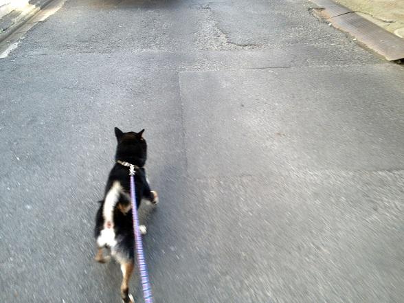 ゆうき散歩1