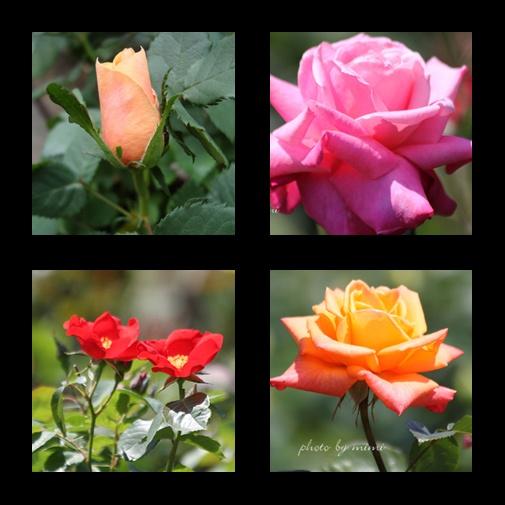 roze-2010-1.jpg