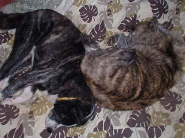 丸寝2匹2