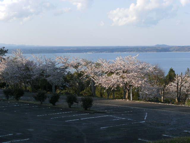 2010.4.24 どすこい春祭り 011