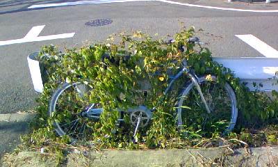 自転車を覆う草