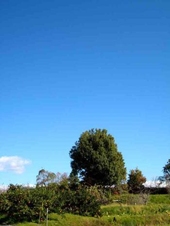 桃花台の木と空