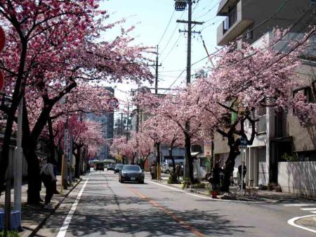 桜がよく見えるアングル