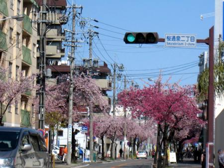 桜通りの看板