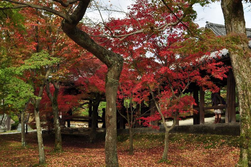 京都市 東福寺 紅葉