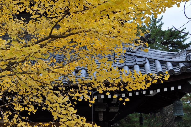 京都市 南禅寺 紅葉