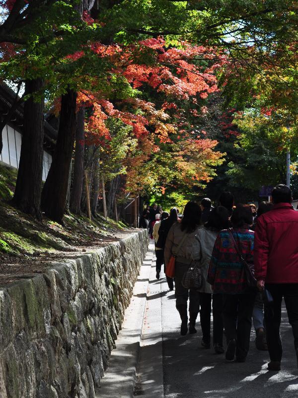 京都 東福寺 紅葉