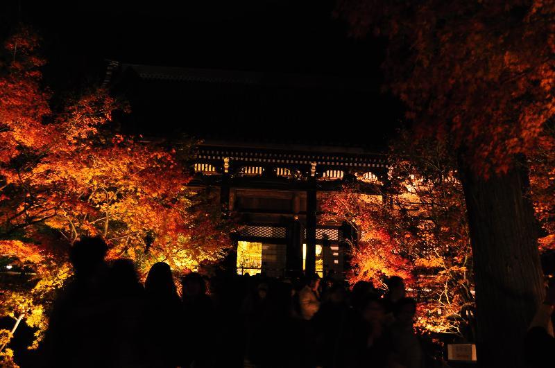 京都 永観堂 紅葉