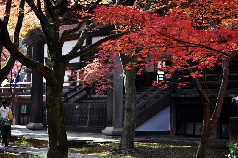 京都市 真如堂 紅葉