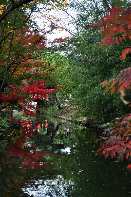 高松市 栗林公園 紅葉