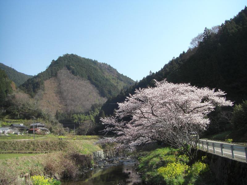 内子町 山里 春景色