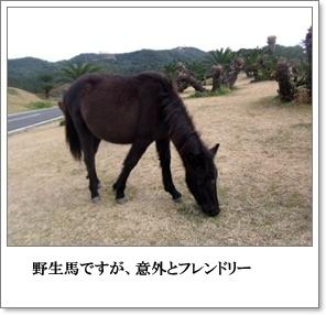 都井岬から青島へ。2