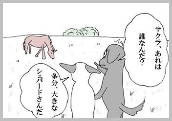サクラ、野生馬に会う。1