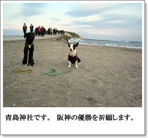 都井岬から青島へ。6