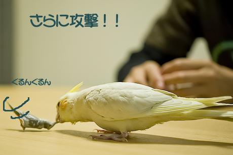 10DSC_9571.jpg