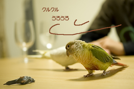 12DSC_9596.jpg