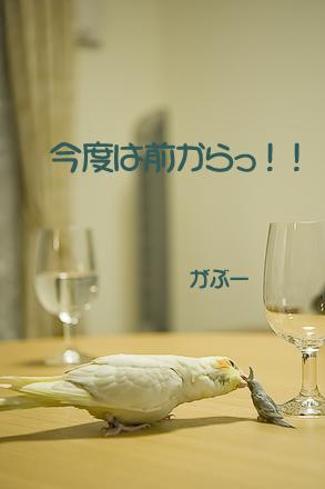 9DSC_9579.jpg