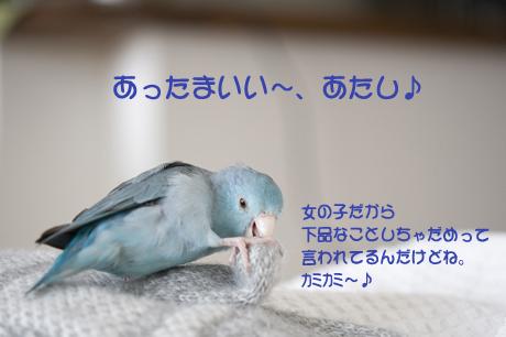 DSC_3018.jpg