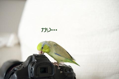 DSC_8599-2.jpg