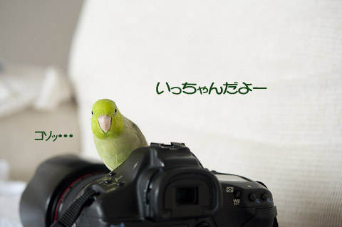 DSC_8601-2.jpg