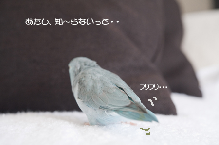 DSC_8882.jpg