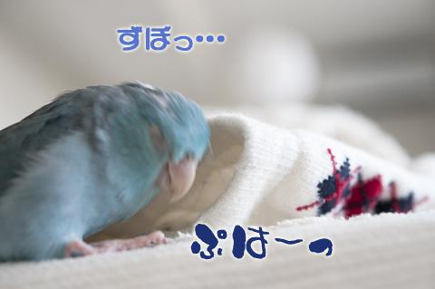_DSC0956-2.jpg