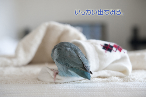 _DSC0980-2.jpg