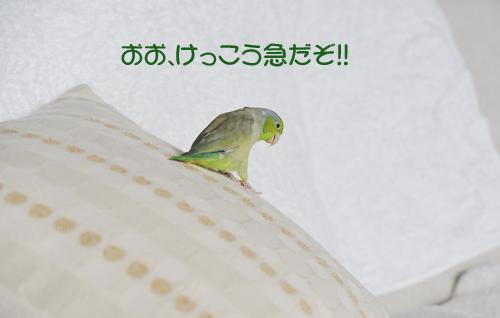 _DSC3397-2.jpg