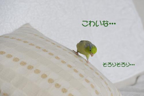 _DSC3398-2.jpg