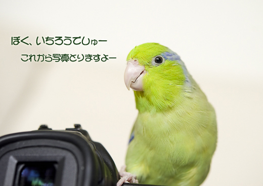 _DSC9678-2.jpg