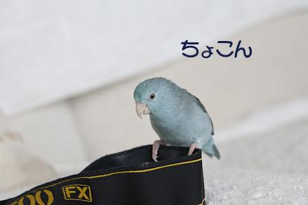 _S7W9841-2.jpg