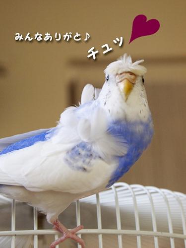 ochiri-club-oreini3-2.jpg