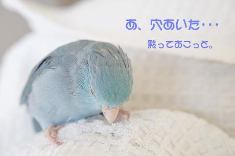 reDSC_1450-2.jpg
