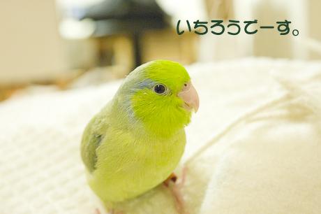 reDSC_2295.jpg