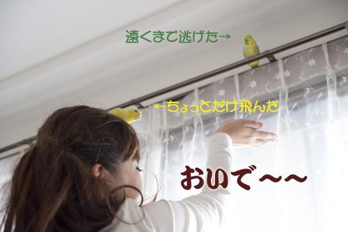 re_DSC3768.jpg