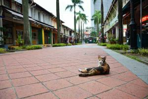 Singapore Cat around Sultan Mosque