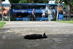 Singapore Cat & Bus