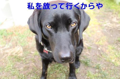 黒犬の祟り
