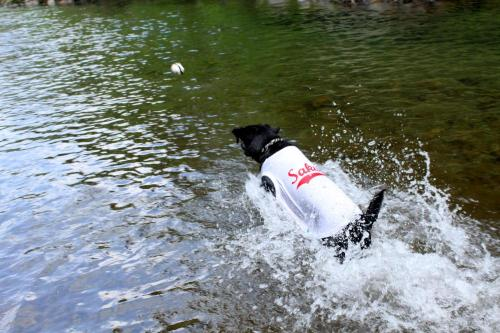 水を得た黒犬1